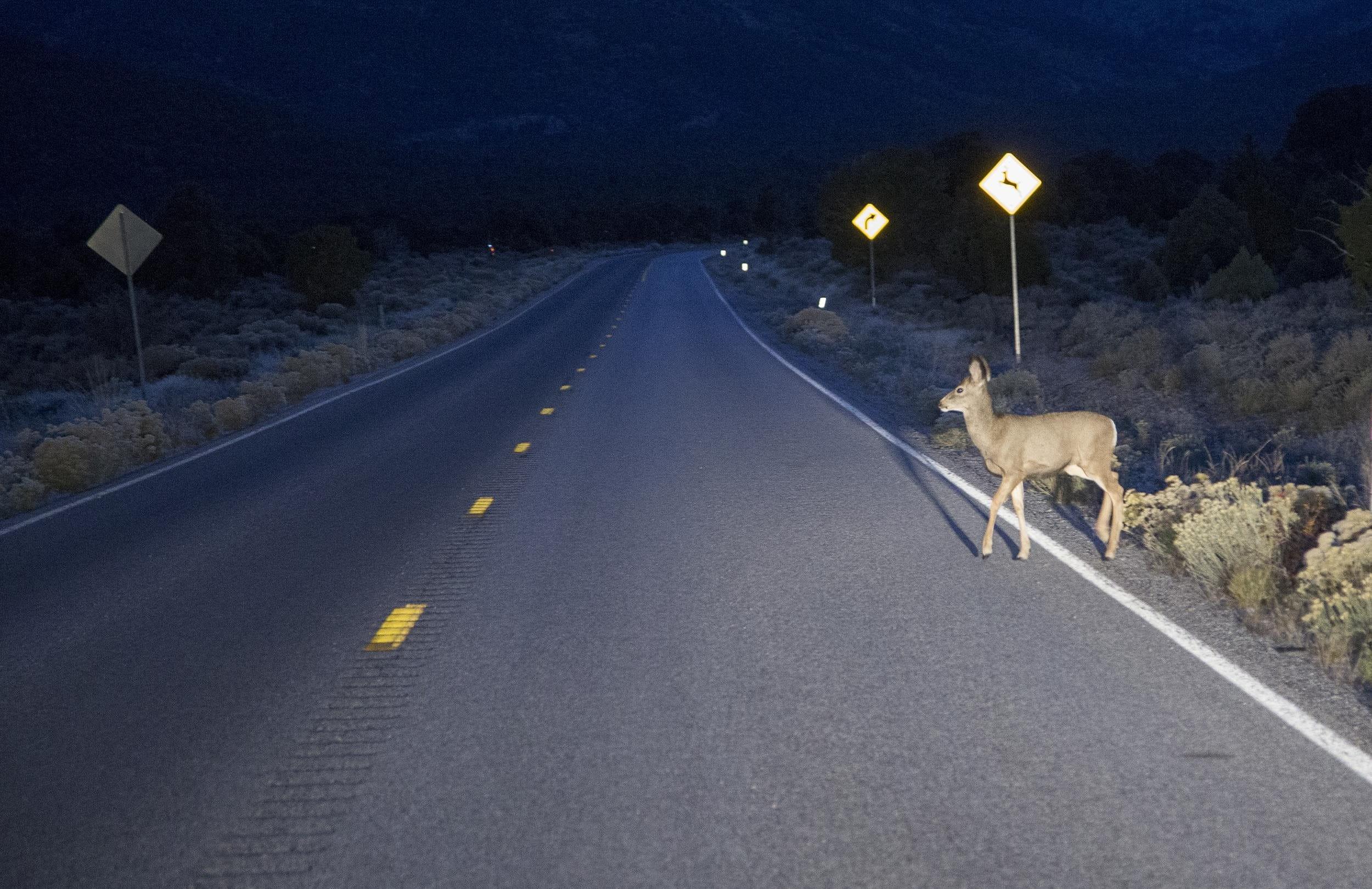 Animal collision