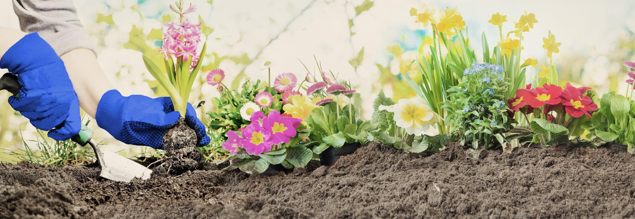 le jardinage avec des fleurs
