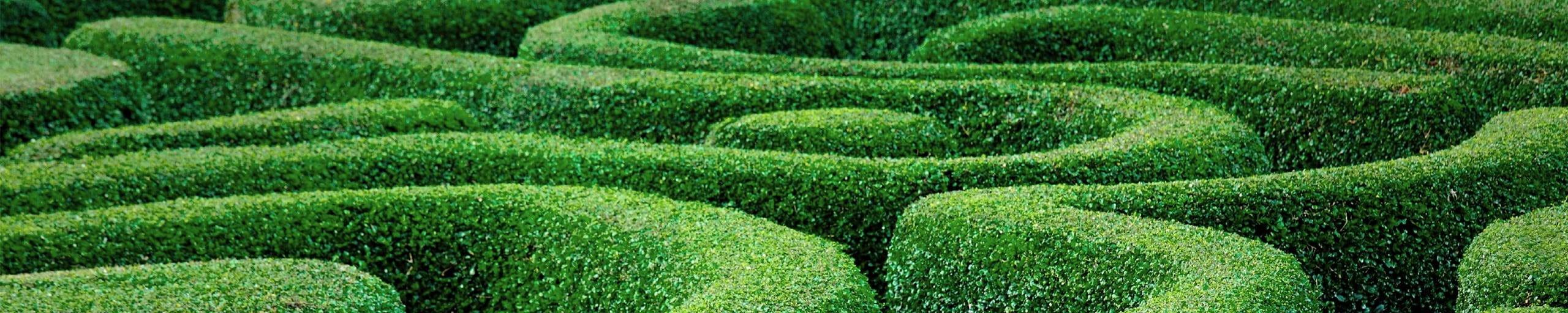 Ein Labyrinth.