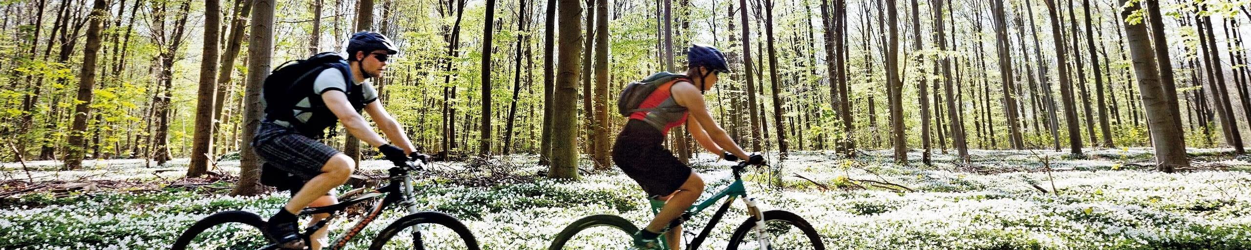 Zwei Mountainbiker fahren auf einem Waldweg.