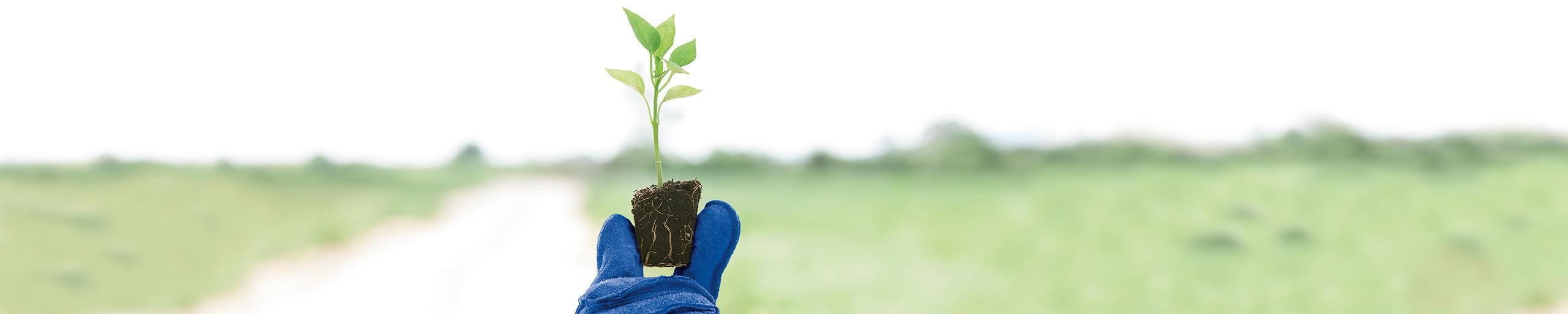 Pflanze mit blauem Handschuh
