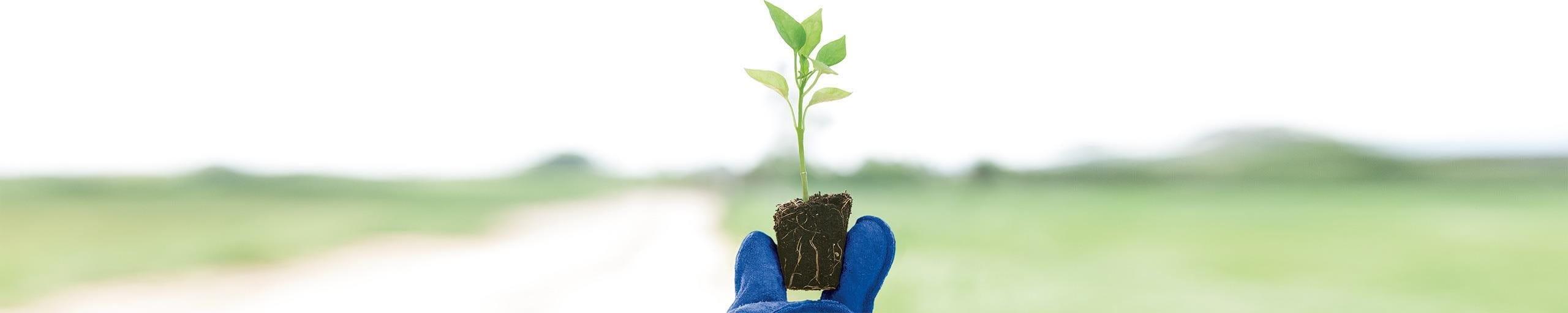 Junge Pflanze